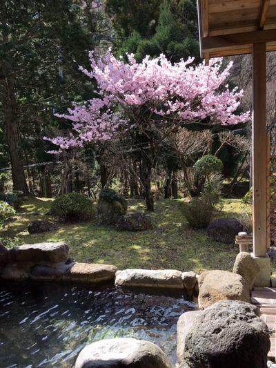 露天で花見もおつなもの_e0234016_20392547.jpg