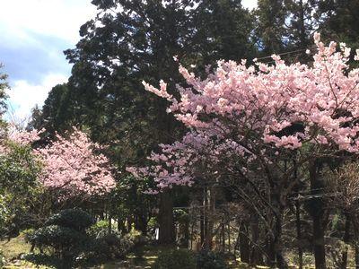 露天で花見もおつなもの_e0234016_20402008.jpg