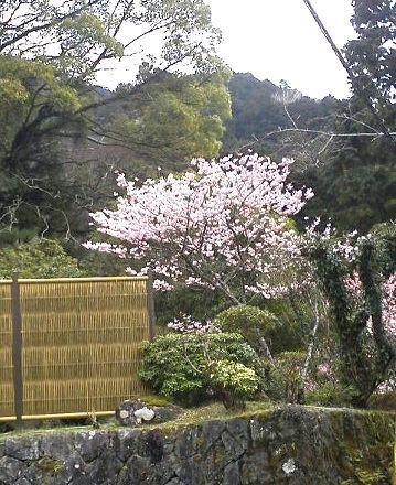 露天で花見もおつなもの_e0234016_20405603.jpg