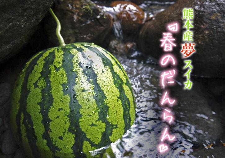 夢スイカ 令和2年の熊本産小玉スイカ「ひとりじめHM」明日12時より先行予約受付をスタートです!!_a0254656_18215466.jpg