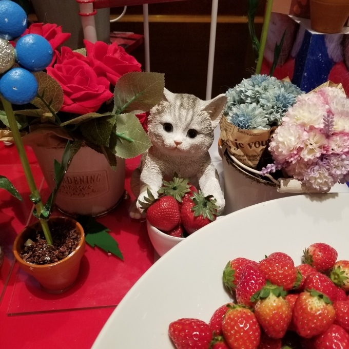 STRAWBERRY CATS COLLECTION_c0369492_22580800.jpg