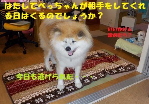 f0121712_22035688.jpg