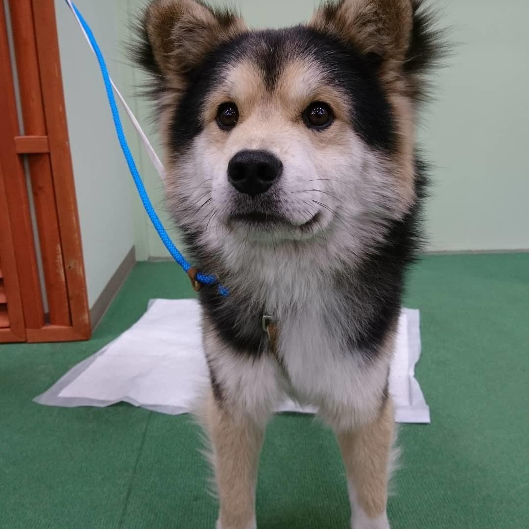 保護犬の里親会_b0235714_21041224.jpg