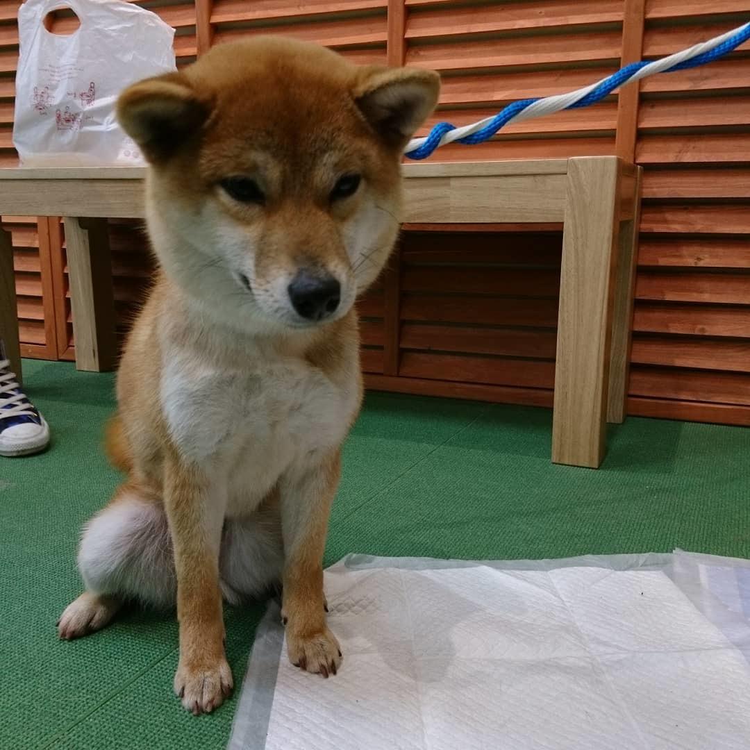 保護犬の里親会_b0235714_21065597.jpg