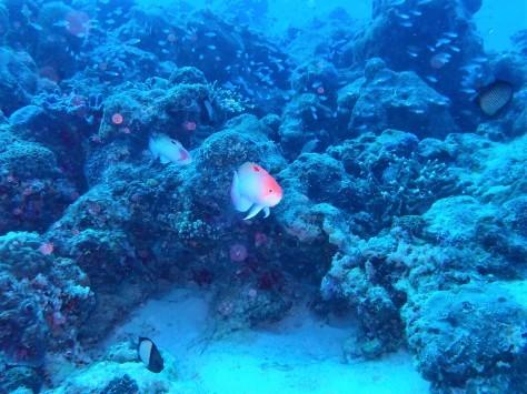 3月15日水納島ダイビング&ホエールウォッチング_c0070933_08520240.jpg