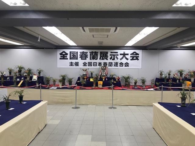 朶朶香チャボ「天平白蘭」                  No.1943_d0103457_00051876.jpg
