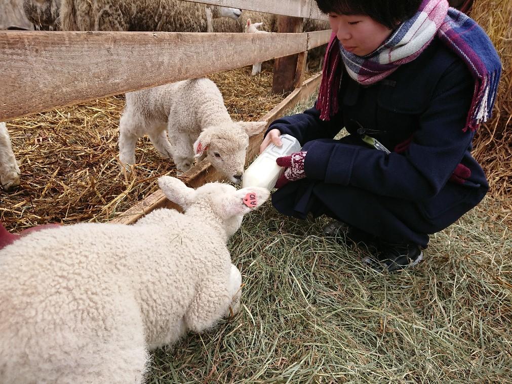 子羊と子山羊   _e0048582_19202631.jpg