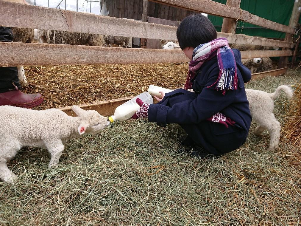 子羊と子山羊   _e0048582_19202778.jpg