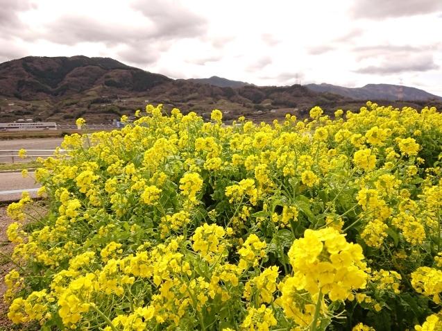 富山から和歌山へ_e0167593_22064556.jpg