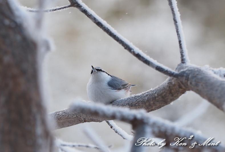 立派な角の「エゾジカ」さんと、ホテルで会えた鳥さん達♪_e0218518_20364473.jpg