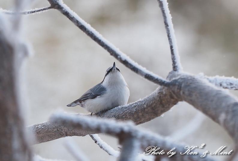 立派な角の「エゾジカ」さんと、ホテルで会えた鳥さん達♪_e0218518_20365944.jpg
