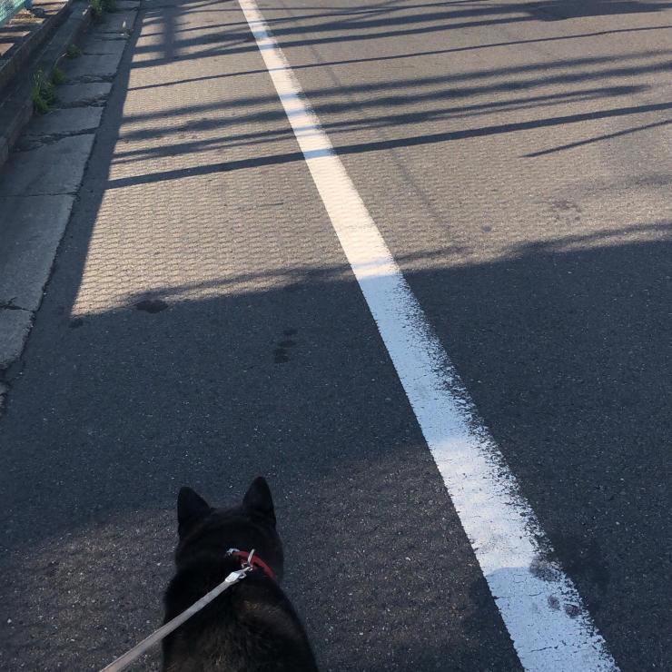 久々の散歩(柴犬♀)_b0317723_08221714.jpg