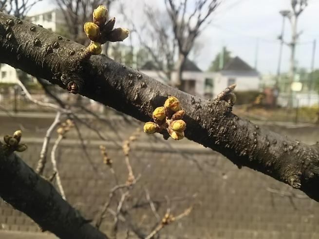 春の風_c0076939_20521324.jpg
