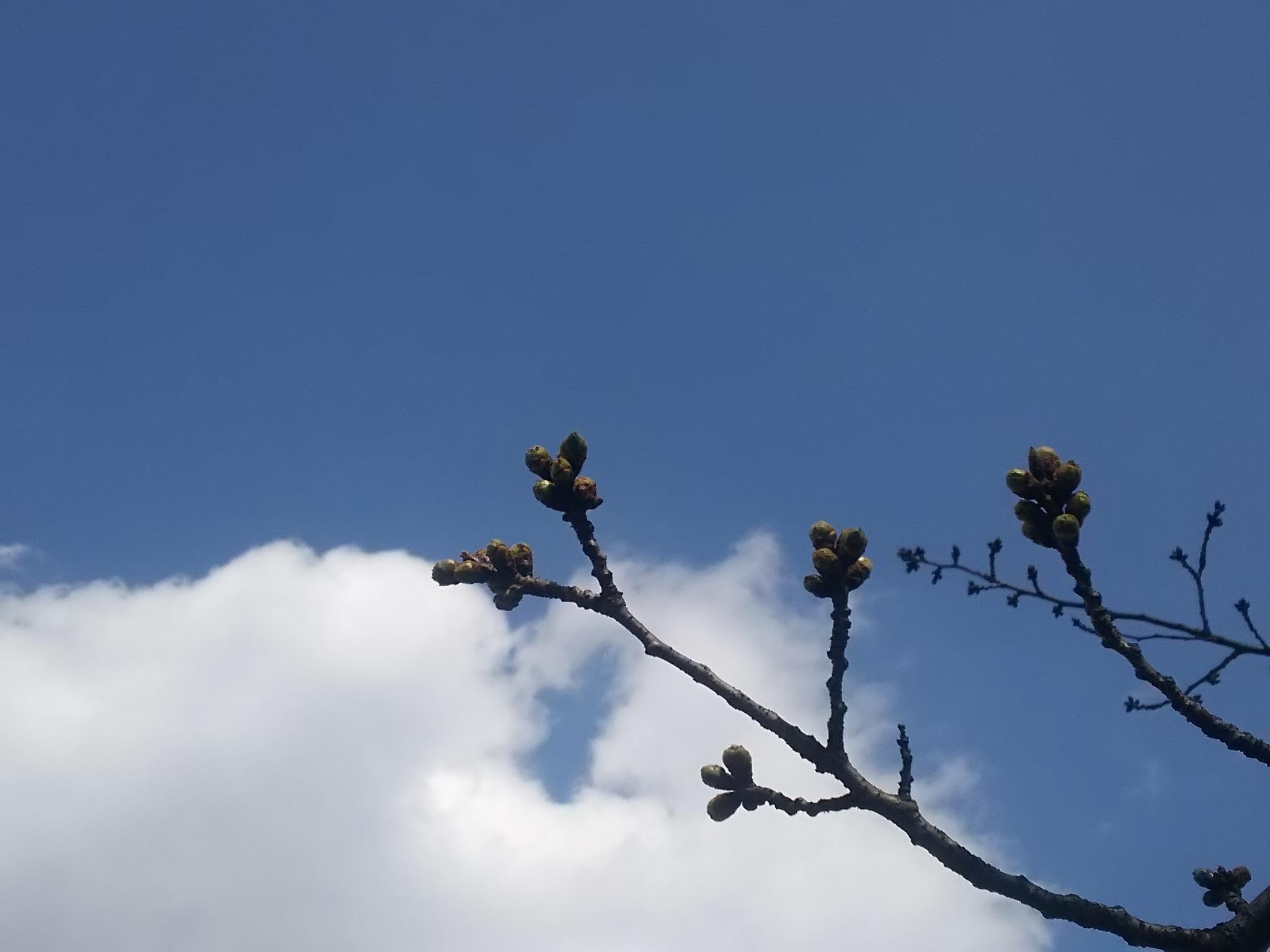 春の風_c0076939_20530667.jpg