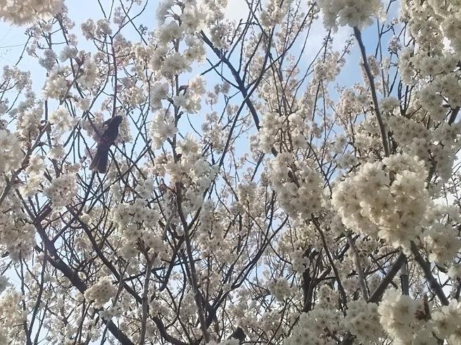 春の風_c0076939_20532790.jpg