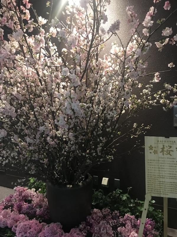 三月大歌舞伎(歌舞伎座)_c0366777_20363490.jpeg