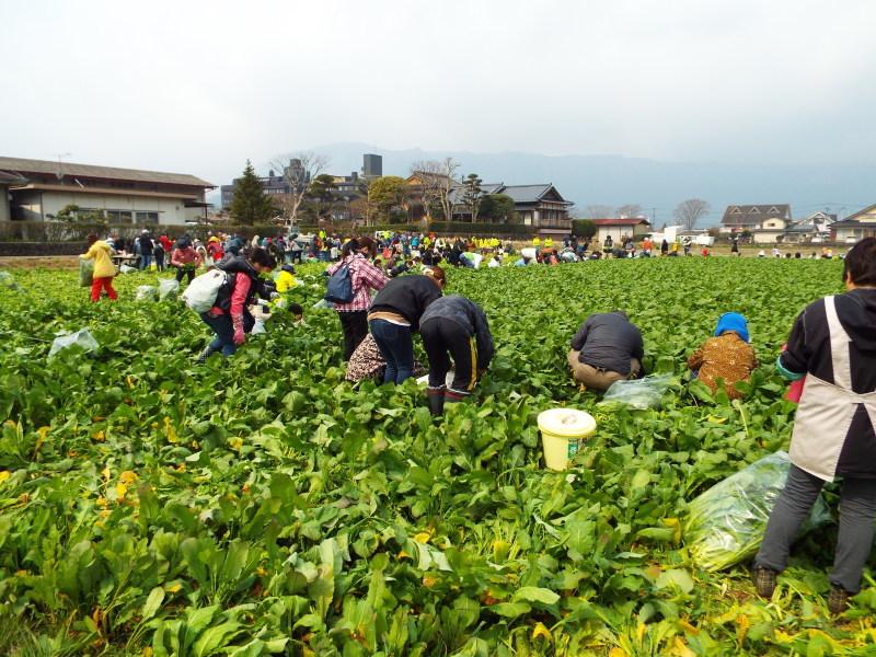 阿蘇高菜を摘みに内牧へ行ってきました_c0329378_23205977.jpg