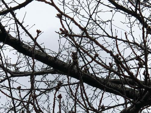 かぶらの桜&#127800;並木は、今こんな状態です。</div>_d0338282_14301022.jpg