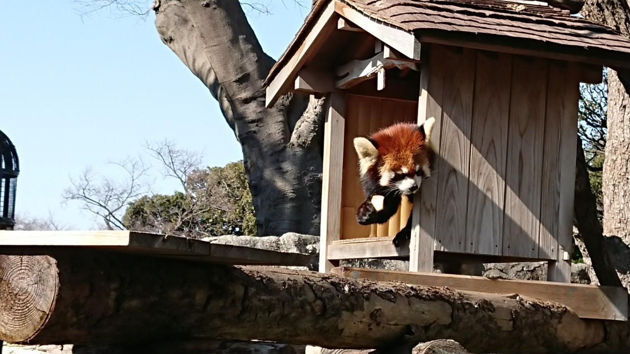 横浜散策2019/3/9 野毛山動物園_e0076995_09163257.jpg