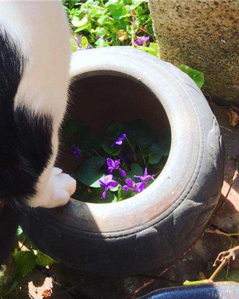 庭のぐるりの小さな春。_d0077603_20373820.jpg