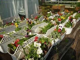 園芸療法の時間に寄せ植えをしました_d0163307_11590540.jpg