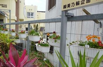 園芸療法の時間に寄せ植えをしました_d0163307_11591531.jpg