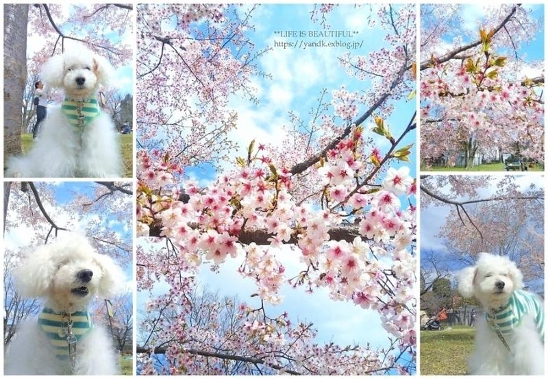 春到来!_d0083623_11520008.jpg