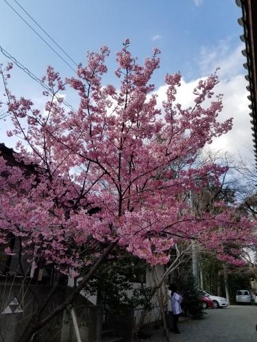 17日 神奈川海老名「龍峰寺」観音祭_f0165126_15113512.jpg