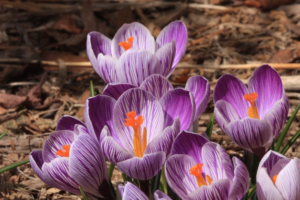 春作業_c0111229_18322047.jpg
