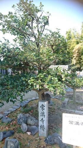 常満寺へ行って来ました!_f0373339_01093261.jpeg