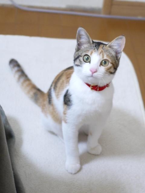 猫のお留守番 ミニ子ちゃん編。_a0143140_21484264.jpg