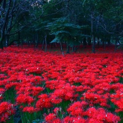 Hawaiian Boyz Bags Bugs, Opus and Interlude/スマホから夢は広がらない。広がると思っている者は脳内にヒガンバナの花畑が広がっている基地外である。_c0109850_07385163.jpg