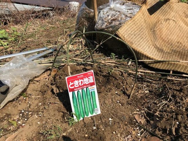 地這い胡瓜種蒔き&ネギ、春大根発芽3・17_c0014967_06452483.jpg