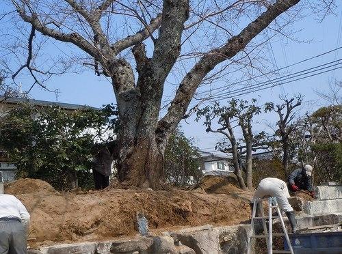 家族を見守ってきた桜も今は ・・・_b0102572_2337353.jpg