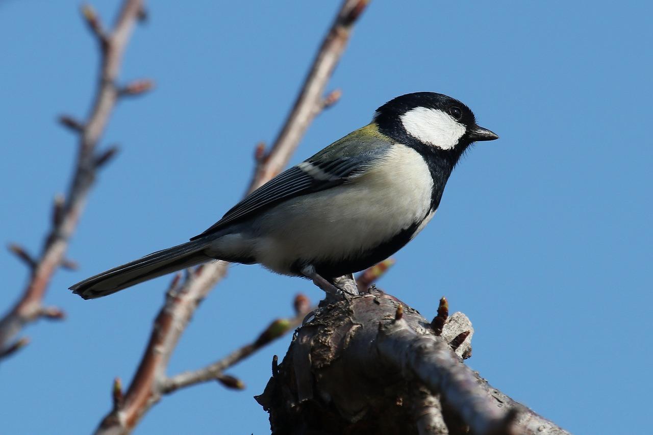 ★先週末の鳥類園(2019.3.16~17)_e0046474_00063481.jpg