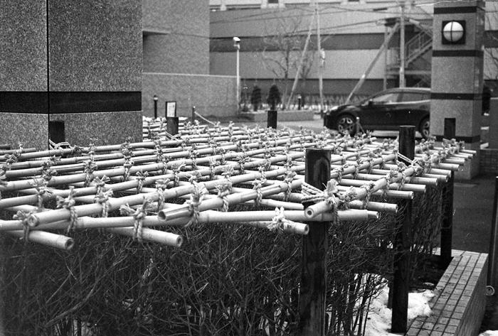 厚別南中学校の卒業式と竹雪囲いモノクロ版_c0182775_18213556.jpg