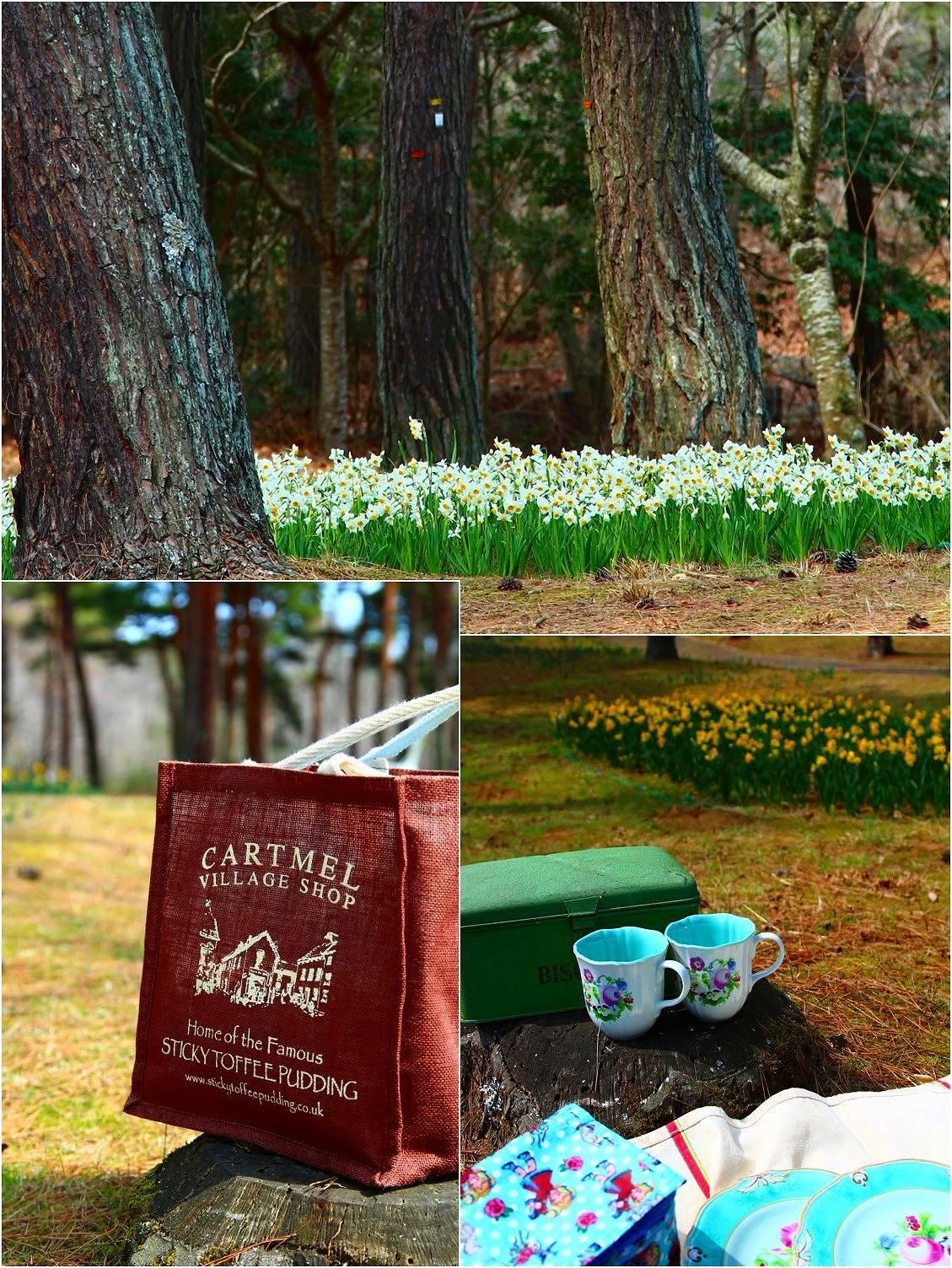 Daffodil picnic_a0107981_22570817.jpg