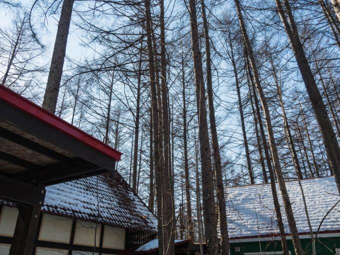 春の陽気に・・エゾリス君が屋根からカフェ覗く。_f0276498_21340606.jpg