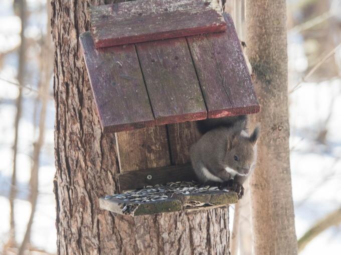 春の陽気に・・エゾリス君が屋根からカフェ覗く。_f0276498_21353173.jpg