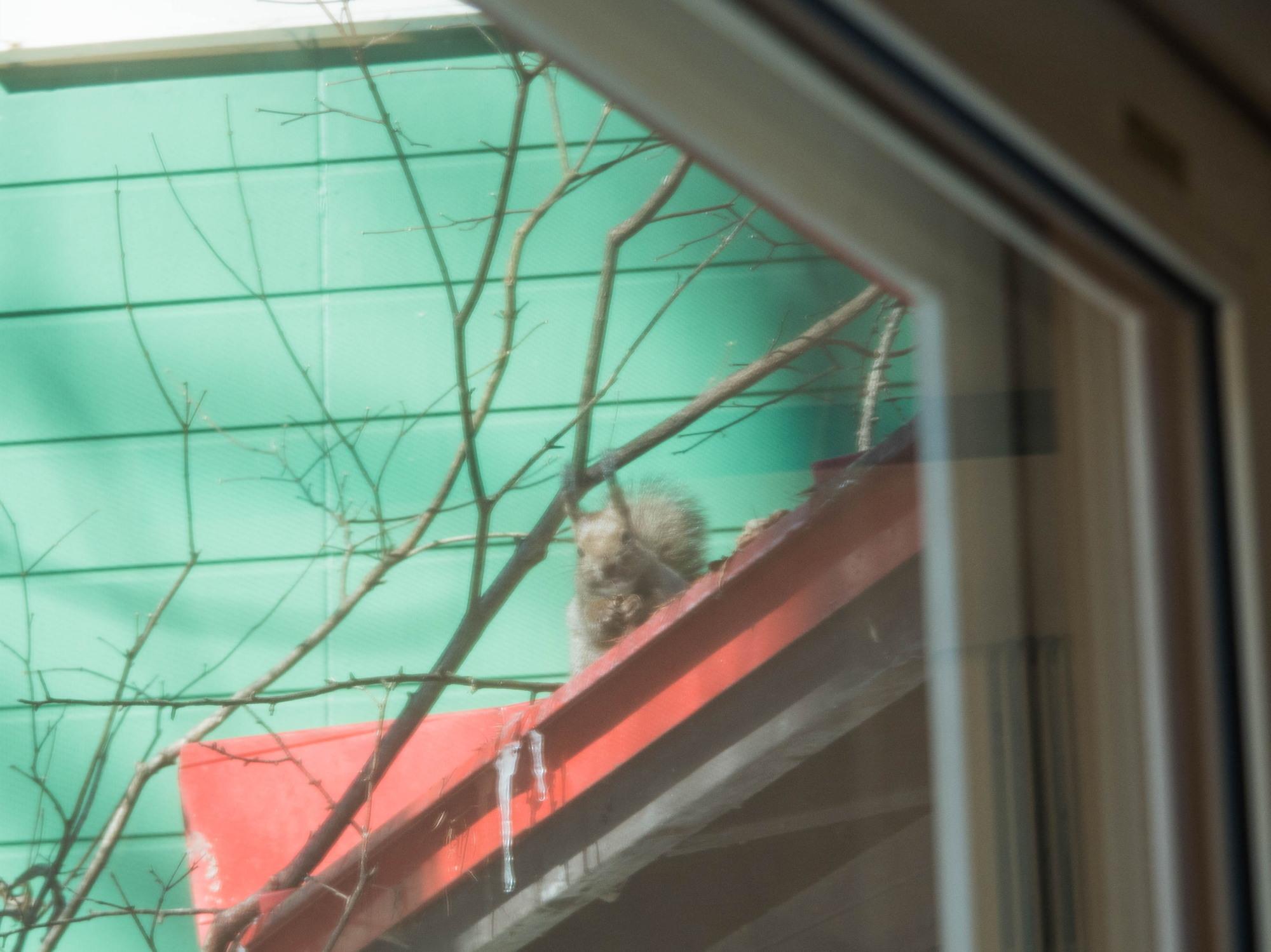 春の陽気に・・エゾリス君が屋根からカフェ覗く。_f0276498_21364759.jpg