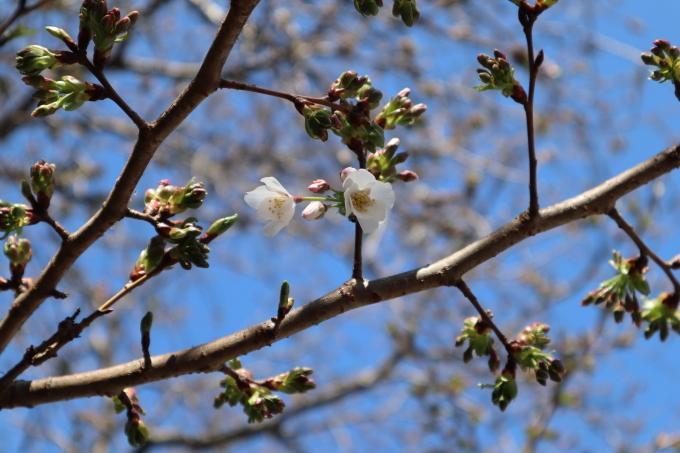春の足音   聞いて聴いて_b0239402_16424080.jpg