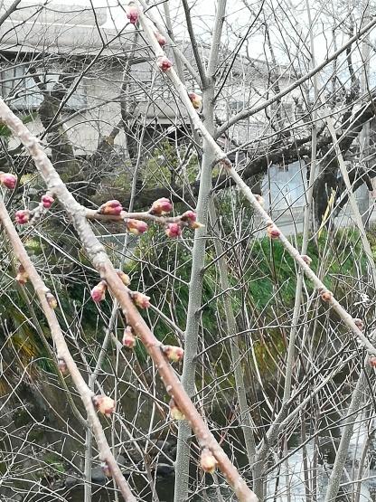 桜はまだまだ_b0289206_20222576.jpg