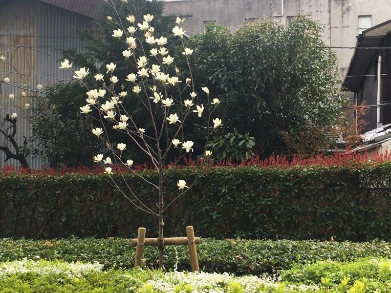 まさに春、しかも満月  NO.627_c0102513_23384946.jpeg
