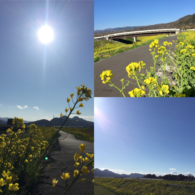 2019年春の日本滞在記 最後に_f0095325_01271601.jpg