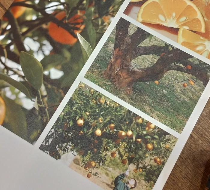 新商品 森果樹園×ツギキより_e0295731_16400885.jpg