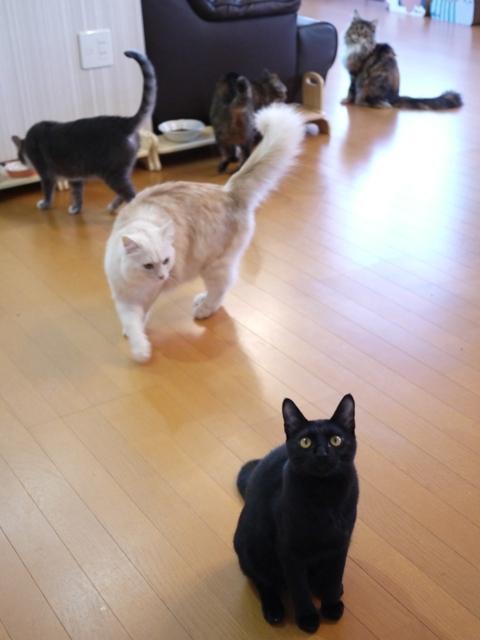 猫のお留守番 天ちゃん麦くん茶くん〇くんAoiちゃん編。_a0143140_22112836.jpg