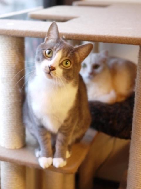 猫のお留守番 天ちゃん麦くん茶くん〇くんAoiちゃん編。_a0143140_22115399.jpg