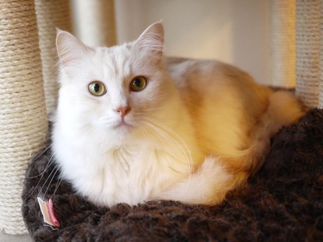 猫のお留守番 天ちゃん麦くん茶くん〇くんAoiちゃん編。_a0143140_22120354.jpg