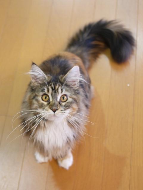 猫のお留守番 天ちゃん麦くん茶くん〇くんAoiちゃん編。_a0143140_22121895.jpg