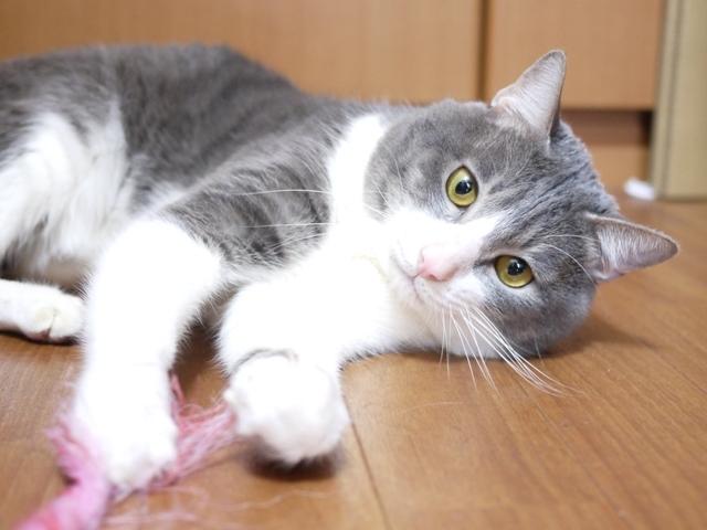 猫のお留守番 根津美くん編。_a0143140_22285038.jpg